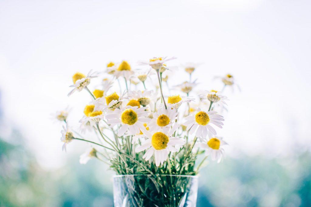 daisy_glass